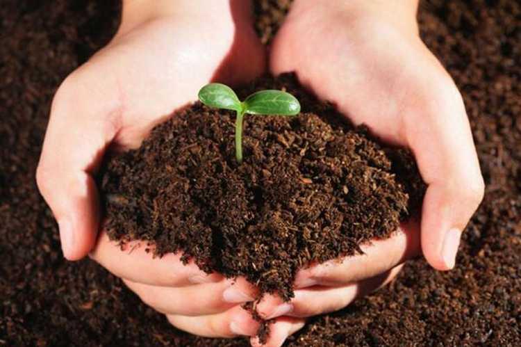 如何测定农用地土壤中的多环芳烃、多氯联苯和有机氯农药-fudajzx.com北纳标物网