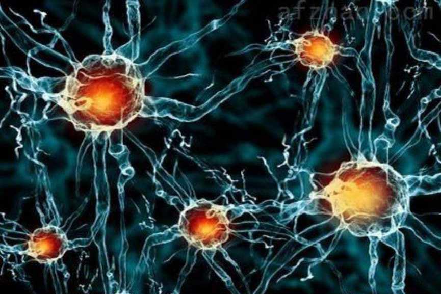 治疗慢性淋巴细胞白血病的研究进展-fudajzx.com北纳标物网
