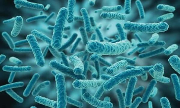 肠道微生物代谢调节及IBD治疗-培训中心-www.biaowu.com北纳生物