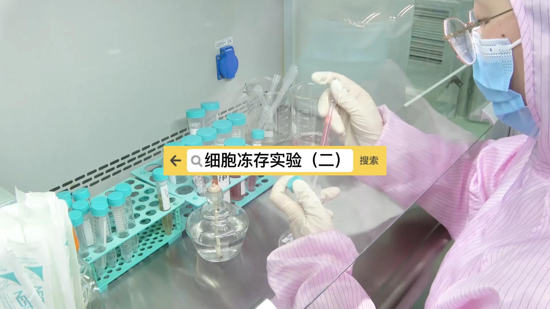 细胞冻存实验(二)
