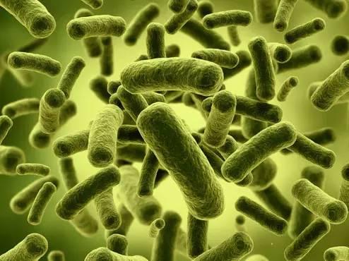 自身免疫性疾病及鼠疫耶尔森菌的研究进展-培训中心-www.bncc.org.cn北纳生物
