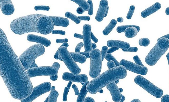 微生物在肿瘤治疗中的应用及合成生物学异源合成多种天然化合物-培训中心-www.bncc.org.cn北纳生物