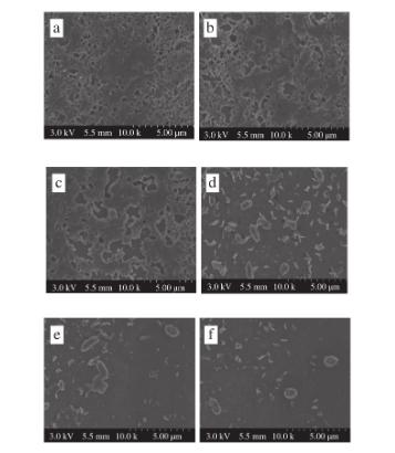 扫描电子显微镜图|北纳生物