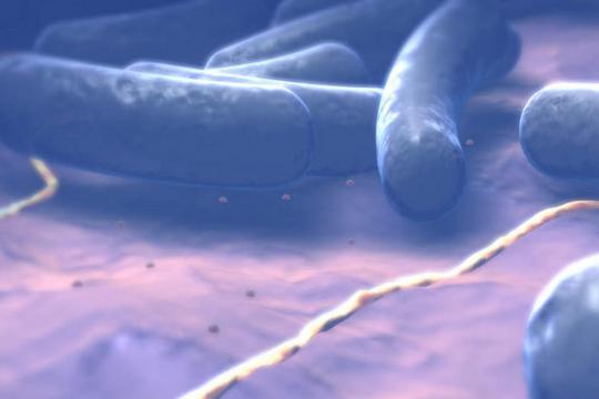 食品中蜡样芽孢杆菌检验法