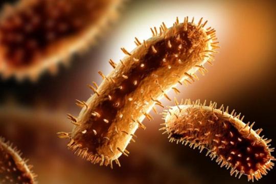 探究水产品中副溶血性弧菌的耐药性(一)