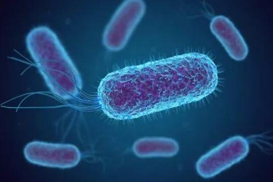 大肠埃希氏菌及检验