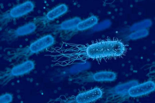 抗菌肽微胶囊化技术及缓释特性分析(一)