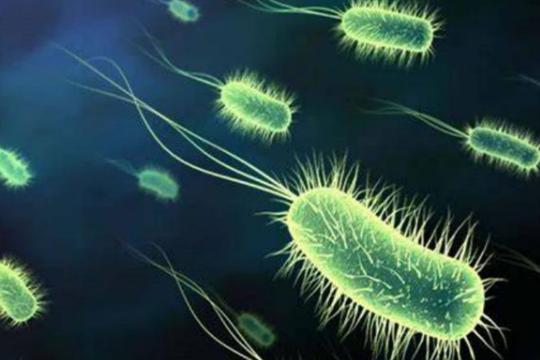 药品中大肠埃希菌的检验