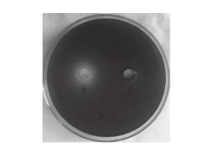 紫色杆菌|北纳生物