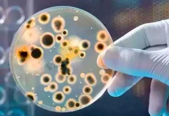 金黄色葡萄球菌的危害程度评估