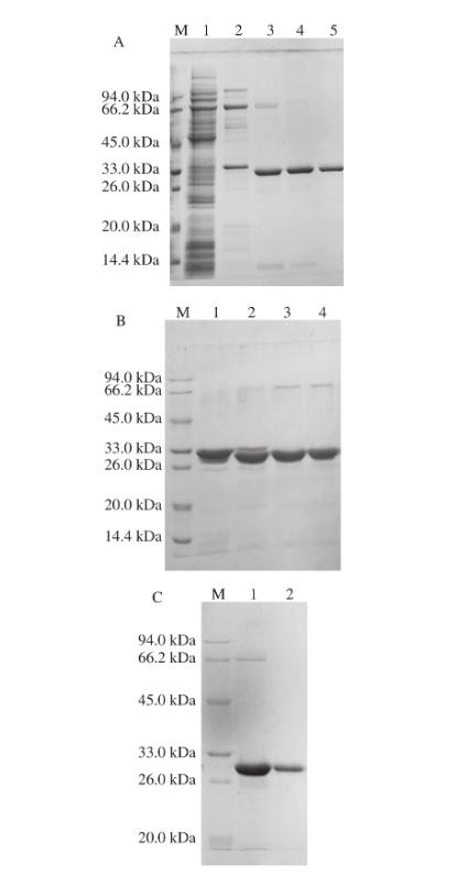 凝血酶切除6×His标签肽|北纳生物
