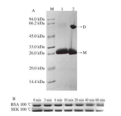 ΔNspSEK蛋白聚合状态分析|北纳生物