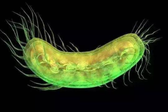 铜绿假单胞菌的检查方法