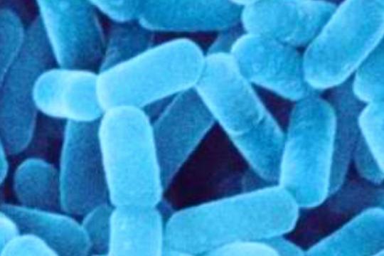 乳酸菌的生理生化鉴定