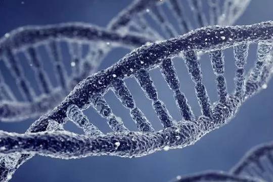 研究团队在酶工程方向取得新进展