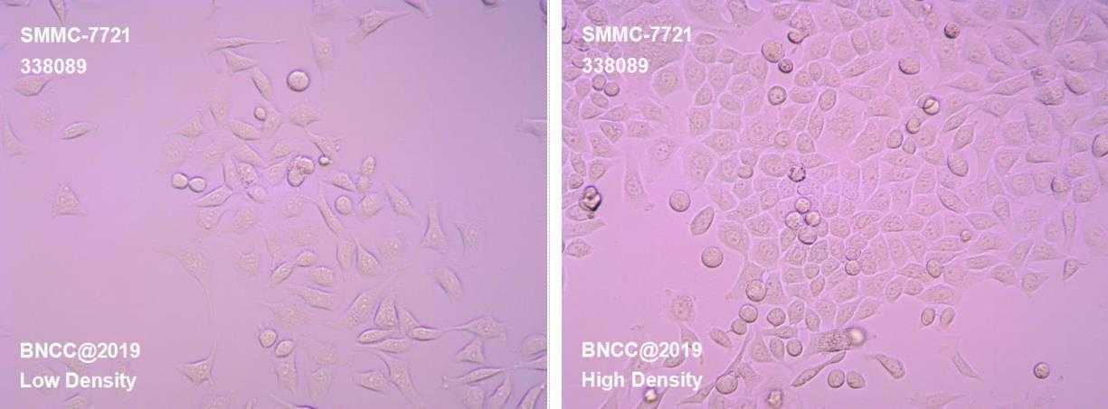 人肝癌细胞-菌种及细胞-北纳生物