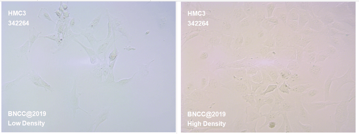 人小胶质细胞-肿瘤细胞-BNCC细胞库-细胞菌种网
