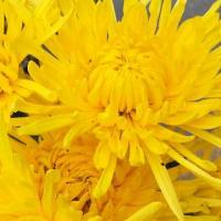 风的承诺-个人主页-www.bncc.org.cn北纳生物
