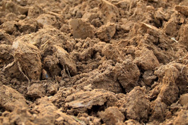 秸秆还田过量对重金属铬超标的土壤不利-www.bnbio.com北纳生物