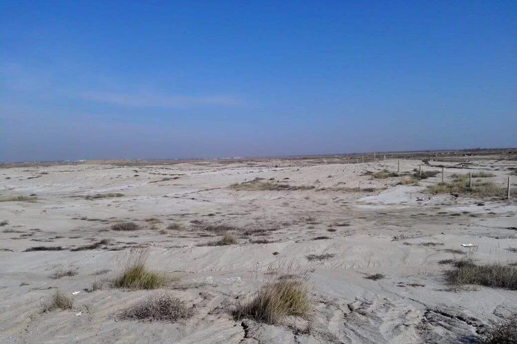科學方法恢複松嫩鹽堿化草地植被-www.biaowu.com北纳生物