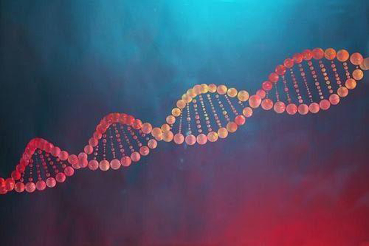 乳铁蛋白可缓解脑中风-www.bnbio.com北纳生物