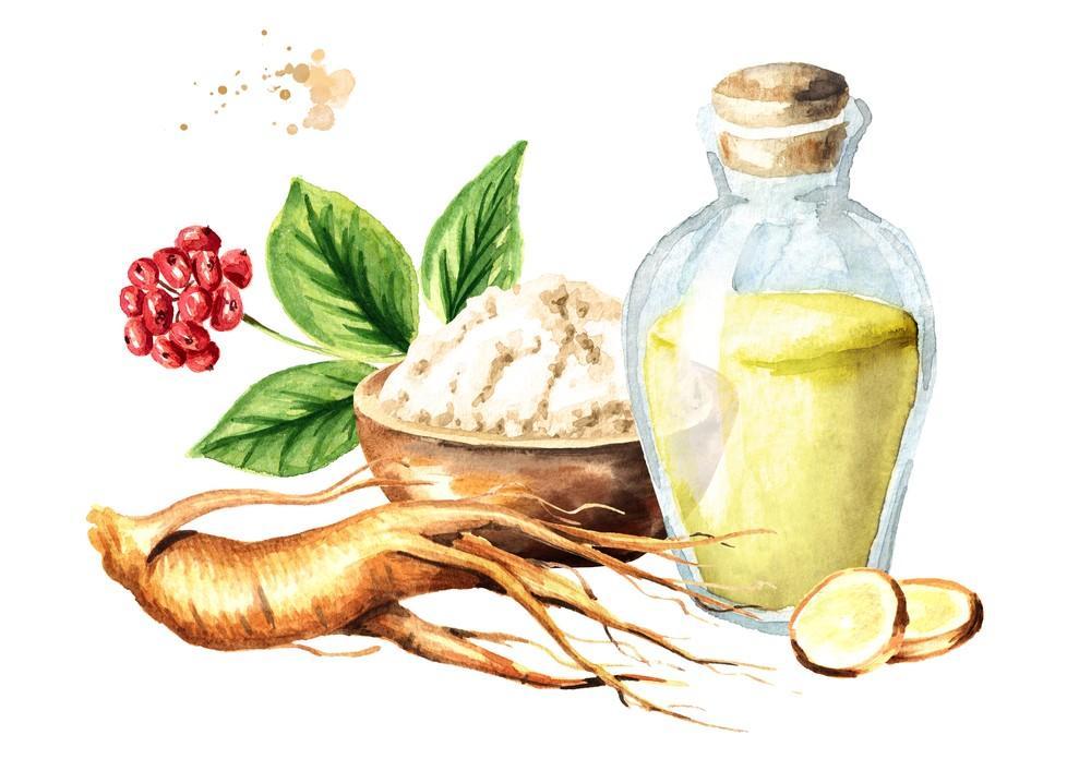 人参皂苷改善肝糖异生的分子机制-www.bnbio.com北纳生物