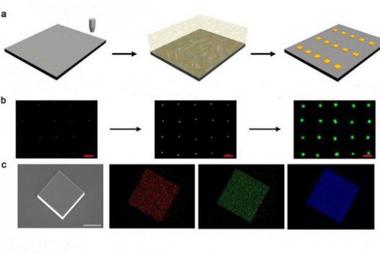 发展无机钙钛矿单晶气相图案化方法并制备高性能器件-www.bnbio.com北纳生物