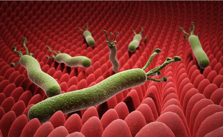 大蒜素可杀死幽门螺旋杆菌? 研究表明最多只能降低感染概率-www.bnbio.com北纳生物