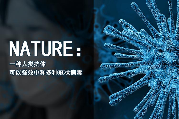 Nature:一种人类抗体可以强效中和包括SARS-CoV和SARS-CoV-2在内的多种冠状病毒-www.bncc.org.cn北纳生物