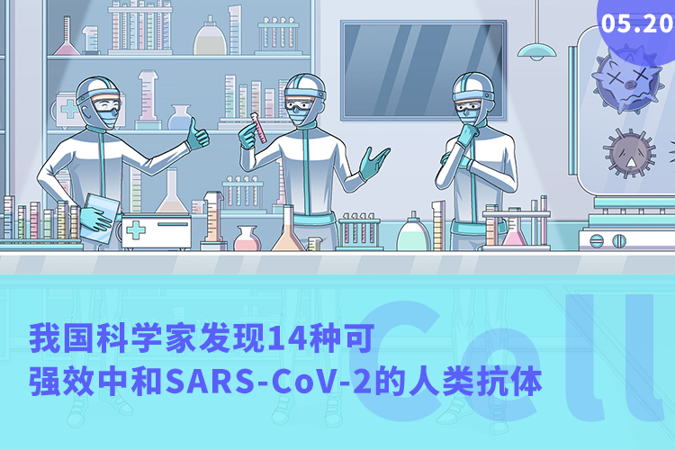 Cell:重大进展!我国科学家发现14种可强效中和SARS-CoV-2的人类抗体-www.bnbio.com北纳生物