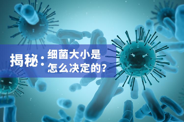 揭秘:细菌大小是怎么决定的?-www.bnbio.com北纳生物