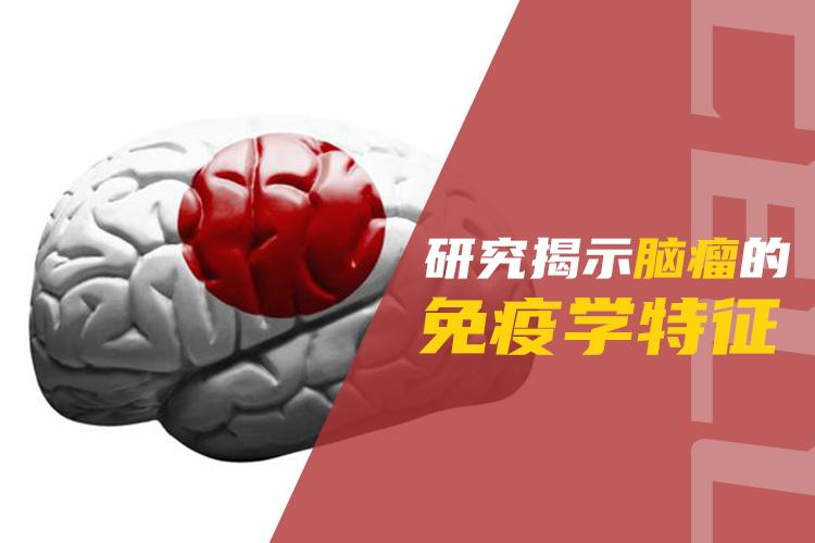 Cell:研究揭示脑瘤的免疫学特征-www.trendslot.com北纳生物