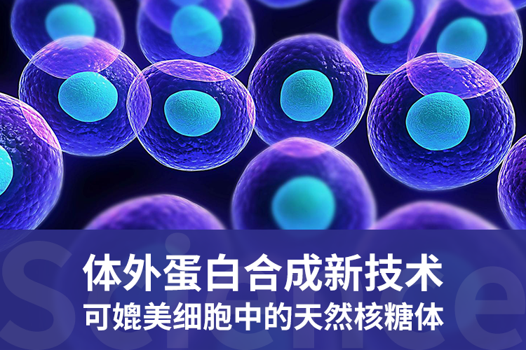 Science:体外蛋白合成新技术可媲美细胞中的天然核糖体-www.bncc.org.cn北纳生物