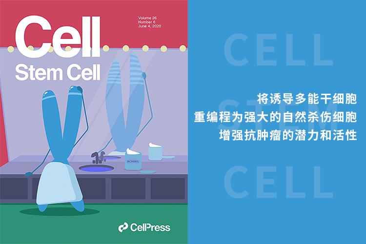 Cell Stem Cell:将诱导多能干细胞重编程为强大的自然杀伤细胞 增强抗肿瘤的潜力和活性-www.bncc.org.cn北纳生物