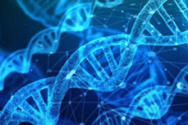 """""""基因魔剪""""首次直接用于人体试验-www.bncc.org.cn北纳生物"""