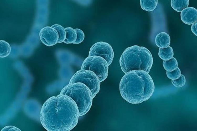 母乳中的细菌菌群会在婴儿的肠道中定植吗?-www.bncc.org.cn北纳生物