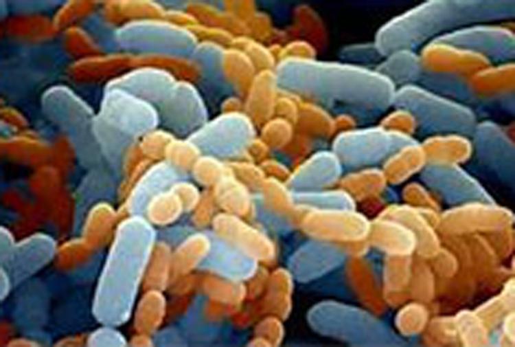 急性肝衰竭小鼠肠道微生态的变化研究-www.bncc.org.cn北纳生物