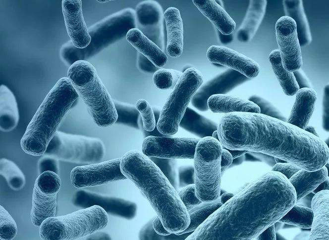 产气肠杆菌的主要应用-www.bnbio.com北纳生物