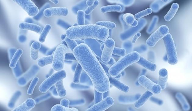 转基因细菌阻止蚊子传播疟疾-www.bncc.org.cn北纳生物