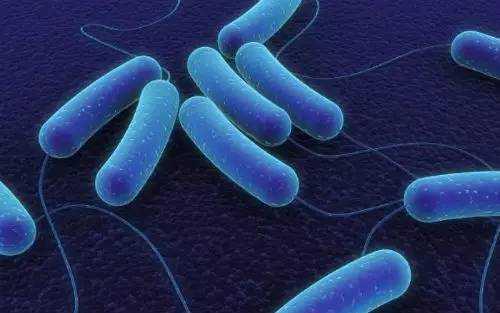 肠道微生物或导致抑郁症的发生-www.bncc.org.cn北纳生物