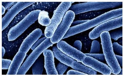大肠杆菌在枸杞子污染检测中的应用(二)-www.bncc.org.cn北纳生物