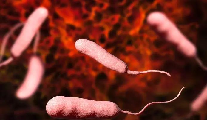 研究人员发现病原菌攻击宿主细胞新机制-www.bncc.org.cn北纳生物