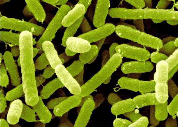 阪崎肠杆菌的鉴定及抑菌特性(二)-www.bncc.org.cn北纳生物