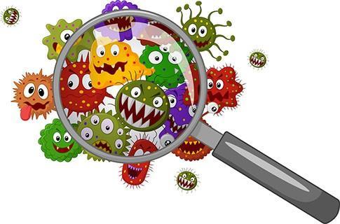 蜂花粉微生物污染及菌群结构分析(一)-www.bncc.org.cn北纳生物