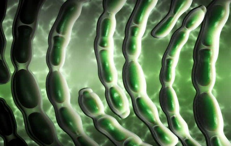探索蜡样芽孢杆菌的分型方法(二)-www.bncc.org.cn北纳生物