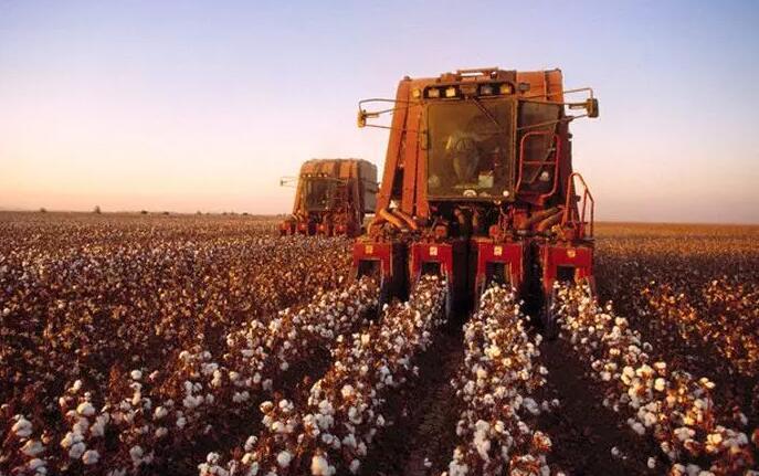 棉子中苏云金芽孢杆菌含量可通过高种植密度提高-www.bncc.org.cn北纳生物