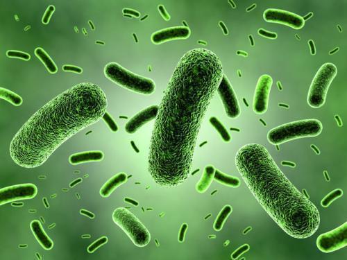 我国在船员肠道健康方面获新成果-www.bncc.org.cn北纳生物