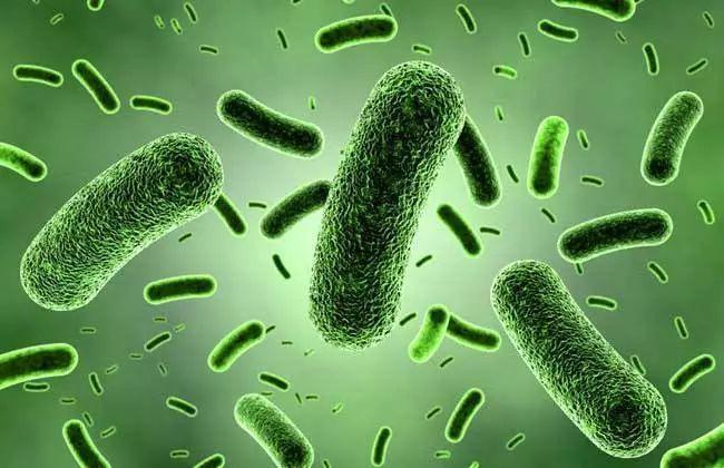 乳酸杆菌抑制致病菌及生物保鲜发酵剂特性评价(二)-www.bncc.org.cn北纳生物