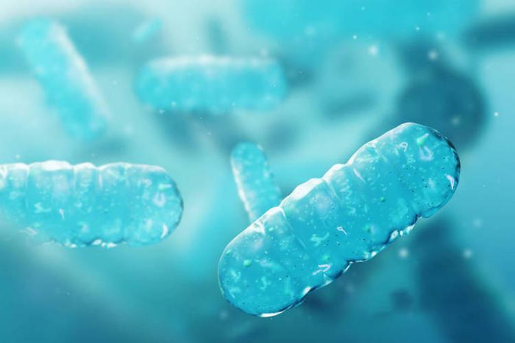 研究揭示蓝细菌适应高盐逆境深层机制-www.bncc.org.cn北纳生物