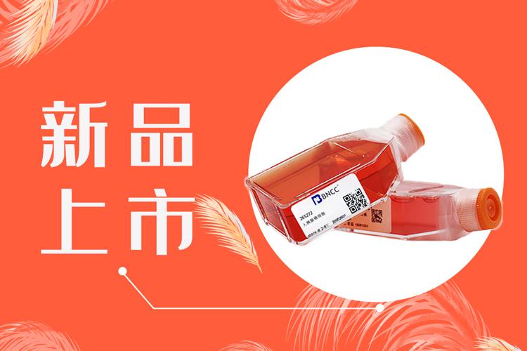 小鼠成纤维细胞等多种新品上市,快快点击咨询啦!-www.bnbio.com北纳生物